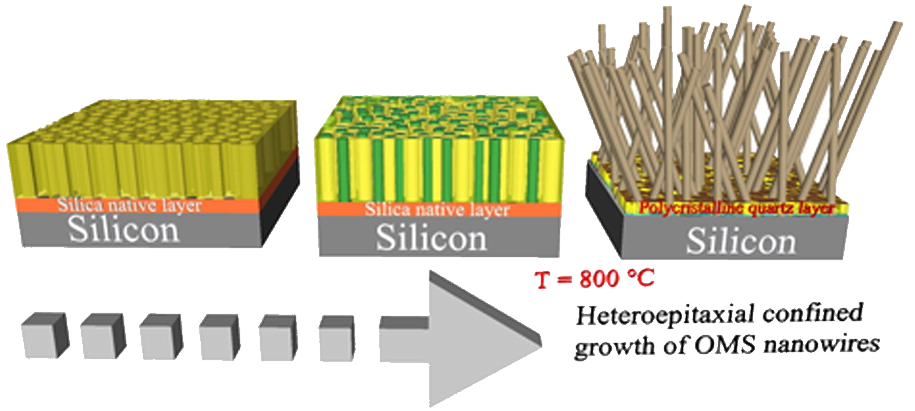 Direct Monolithic Integration of Vertical Single Crystalline Octahedral Molecular Sieve Nanowires on Silicon